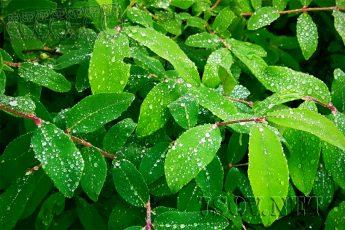 Растения предсказывают погоду