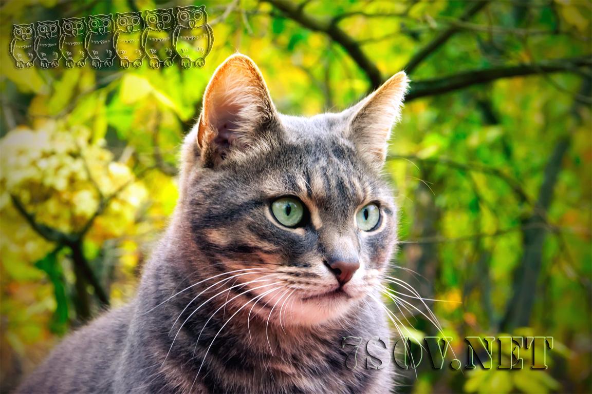Зрение кошек
