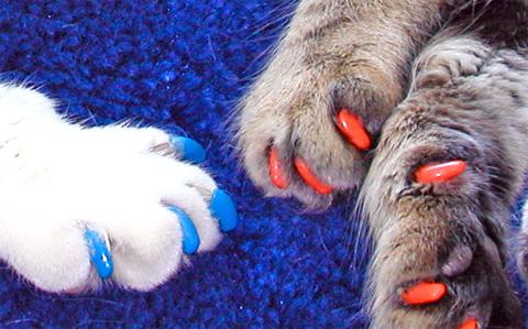 Колпачки на когти для кошек
