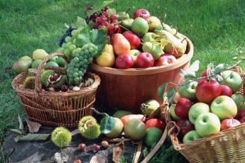Как создать здоровый рацион питания